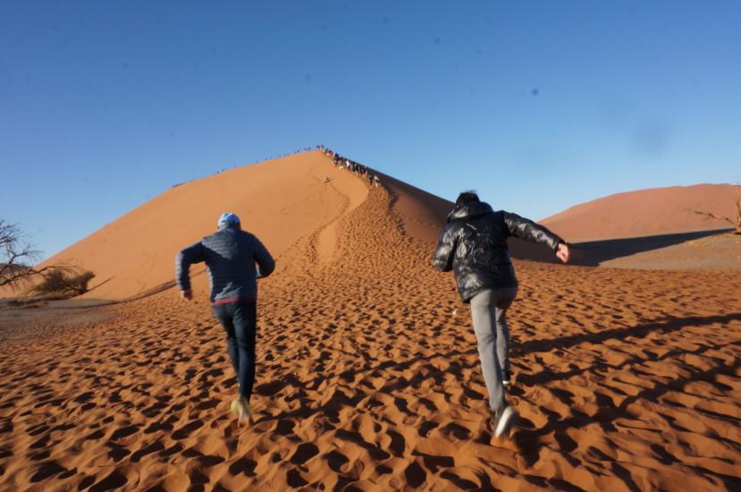 ナミブ砂漠の画像 p1_21